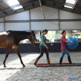 Kennismakingsworkshop Coaching with Horsepower | Ede door Margien Wouters